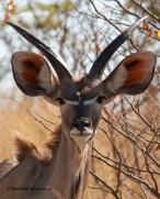 Etosha NP, Namibia