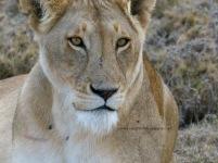 Serengeti NP, Tanzania