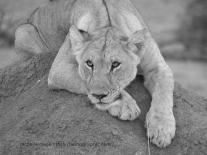 leionready