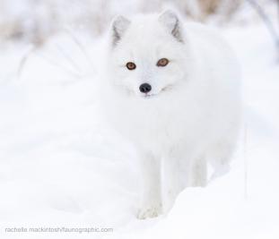 fox_fave22