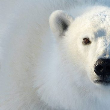 Wild, free and living the dream in Churchill, aka, Canada's amazing sub-Arctic