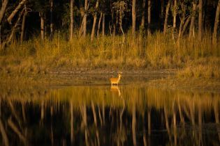 My favourite area of Kanha National Park, Madhya Pradesh. *Please note, the copyright info displayed to the right is incorrect. This is 100% my image (Brendan is my friend who I bought the camera from, and I forgot to change the info on the camera itself - awks!) If you have any queries please contact me on rmackintosh@gmail.com